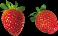 草莓透明背景PNG图片(17张)