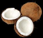 椰子透明背景PNG图片(15张)
