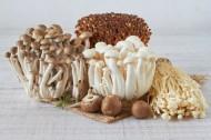 新鲜的蘑菇图片(9张)