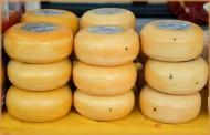 荷兰奶酪图片(16张)