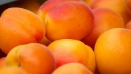 黄澄澄的杏子图片(10张)