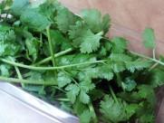 绿油油的香菜图片(12张)