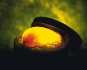 梦幻彩色发光水果图片(15张)