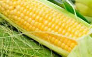 美味玉米图片(11张)