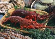鲜美的龙虾图片(20张)