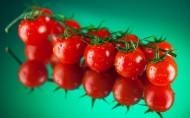 亦果亦蔬西红柿图片(12张)
