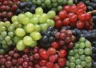 新鲜水果背景图片(15张)