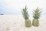美味的菠萝图片(16张)