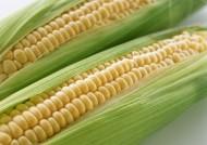 玉米图片(4张)