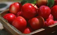 红彤彤的苹果图片(15张)