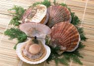 超级好吃的海鲜食材图片(16张)