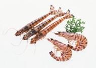 鲜美的河虾图片(14张)