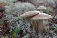 生长在地上的蘑菇图片(15张)