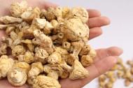 野生营养黄菇图片(8张)