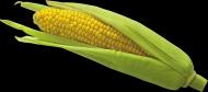 玉米透明背景PNG图片(15张)