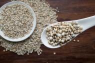 颗粒饱满的薏米图片(9张)
