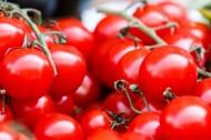 新鲜的番茄图片(15张)