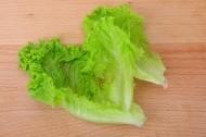 翠绿鲜嫩的生菜图片(12张)