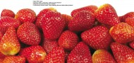 草莓图片(22张)