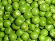 绿色的豌豆图片(21张)