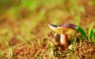 森林中的蘑菇图片(24张)