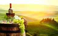 葡萄酒与葡萄图片(13张)