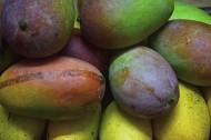 芒果图片(7张)