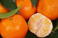 酸甜可口剥开的橘子图片(10张)