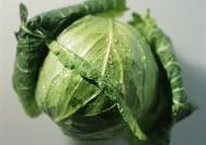 新鲜卷心菜图片(4张)