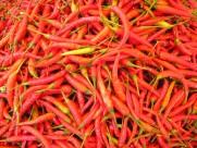 做菜用的辣椒图片(10张)