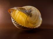 空空的蜗牛壳图片(10张)