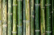 成排的竹子背景素材图片(15张)