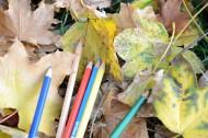 落叶上的彩色铅笔图片(9张)