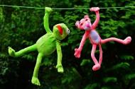 青蛙与豹子图片(16张)