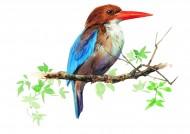 树枝上的鸟彩绘图片(15张)