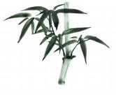 水墨竹子图片(15张)