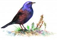 各种彩绘鸟类图片(16张)