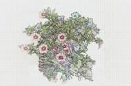 彩色素描花卉图片(8张)