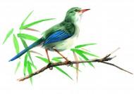 站立在树梢的鸟彩绘图片(15张)
