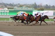 激烈的赛马比赛图片(15张)