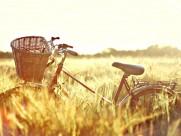 老式单车图片(5张)