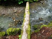 被放倒的大树图片(8张)