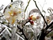唯美的冰凌冰花图片(11张)