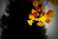 唯美深秋树叶图片(8张)
