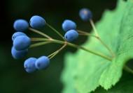 树木果实图片(9张)
