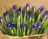 花卉装饰图片(20张)