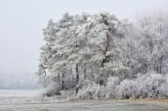 银装素裹的树图片(14张)