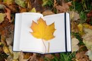 笔记本上的一片枫叶图片(10张)