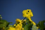 丝瓜花图片(10张)