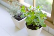 家庭香草种植图片(21张)